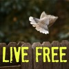 Live Free – A 31 Day Blog Series